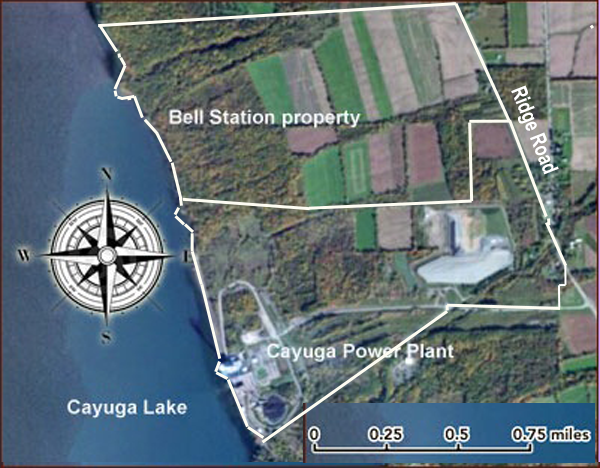 Bell Station and Cayuga Operating Company land