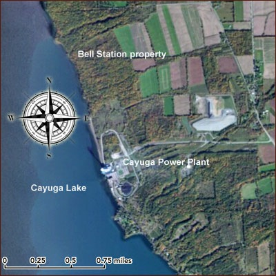 Cayuga Operating Company and Bell Station land